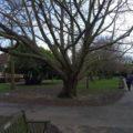 Leigh Library Gardens birds, 2018